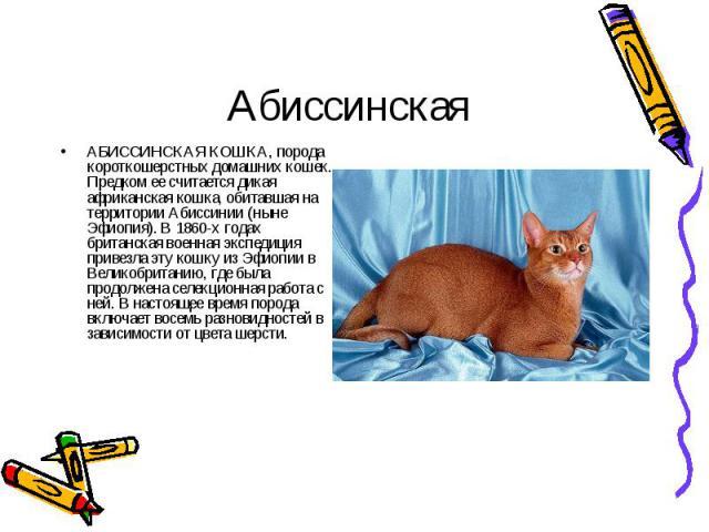 АБИССИНСКАЯ КОШКА, порода короткошерстных домашних кошек. Предком ее считается дикая африканская кошка, обитавшая на территории Абиссинии (ныне Эфиопия). В 1860-х годах британская военная экспедиция привезла эту кошку из Эфиопии в Великобританию, гд…