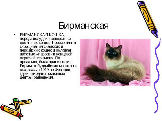 БИРМАНСКАЯ КОШКА, порода полудлинношерстных домашних кошек. Произошла от скрещивания сиамских и персидских кошек и обладает шерстью «персов» и концевой окраской «сиамов». По преданию, была привезена из Бирмы от буддийских монахов и оказалась в 1919 …