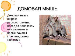 Домовая мышь широко распространена, вслед за человеком она заселяет и новые райо