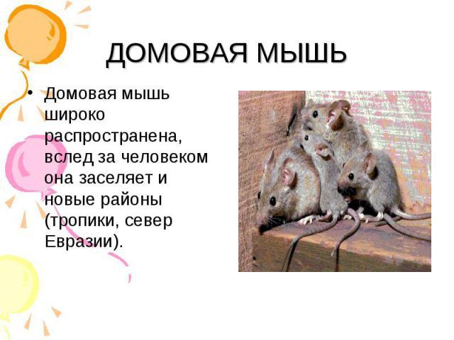 Домовая мышь широко распространена, вслед за человеком она заселяет и новые районы (тропики, север Евразии). Домовая мышь широко распространена, вслед за человеком она заселяет и новые районы (тропики, север Евразии).
