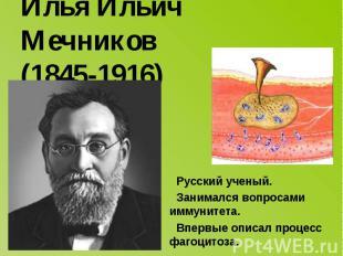 Илья Ильич Мечников (1845-1916) Русский ученый. Занимался вопросами иммунитета.