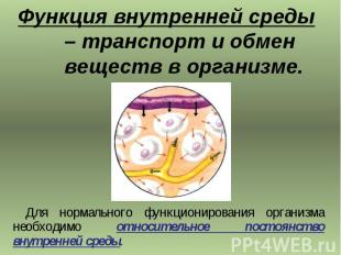 Функция внутренней среды – транспорт и обмен веществ в организме. Для нормальног