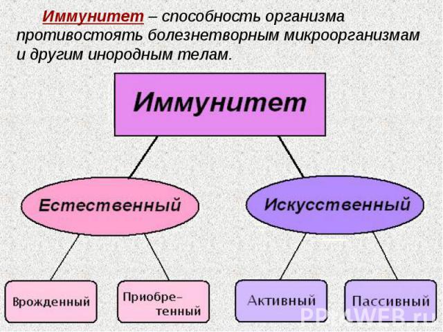 Иммунитет – способность организма противостоять болезнетворным микроорганизмам и другим инородным телам.