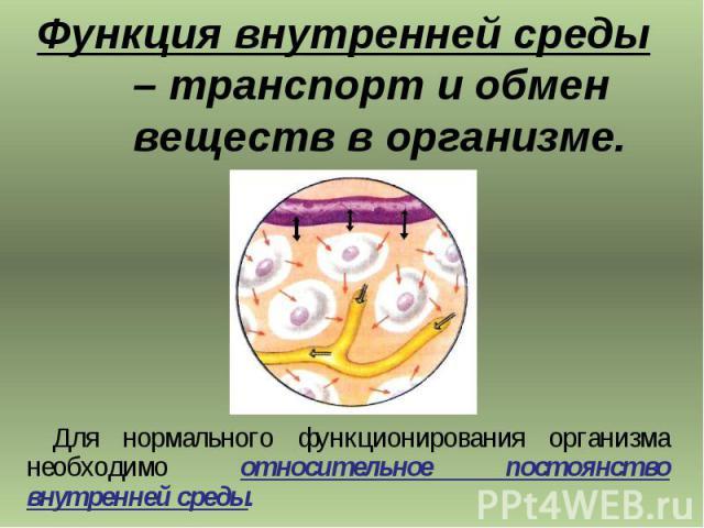 Функция внутренней среды – транспорт и обмен веществ в организме. Для нормального функционирования организма необходимо относительное постоянство внутренней среды.