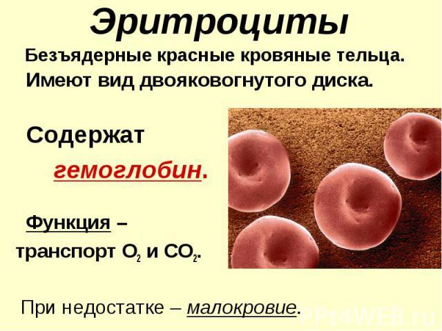 Эритроциты Безъядерные красные кровяные тельца. Имеют вид двояковогнутого диска. Содержат гемоглобин. Функция – транспорт О2 и СО2. При недостатке – малокровие.