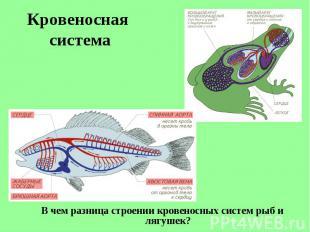 В чем разница строении кровеносных систем рыб и лягушек? В чем разница строении
