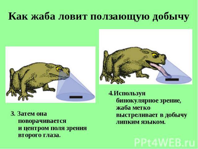 3. Затем она поворачивается ицентром поля зрения второго глаза. 3. Затем она поворачивается ицентром поля зрения второго глаза.