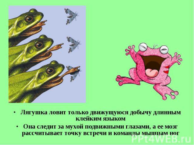 Лягушка ловит только движущуюся добычу длинным клейким языком Лягушка ловит только движущуюся добычу длинным клейким языком Она следит за мухой подвижными глазами, аее мозг рассчитывает точку встречи и команды мышцам ног