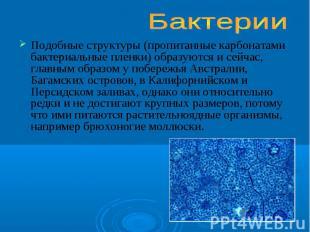 Подобные структуры (пропитанные карбонатами бактериальные пленки) образуются и с