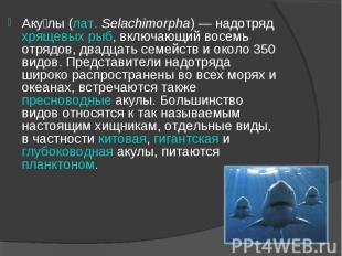 Аку лы (лат. Selachimorpha) — надотряд хрящевых рыб, включающий восемь отрядов,