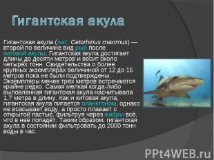 Гигантская акула (лат. Cetorhinus maximus) — второй по величине вид рыб после ки