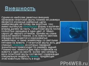 Одним из наиболее заметных внешних признаков гигантской акулы помимо её размера