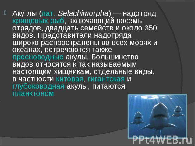 Аку лы (лат. Selachimorpha) — надотряд хрящевых рыб, включающий восемь отрядов, двадцать семейств и около 350 видов. Представители надотряда широко распространены во всех морях и океанах, встречаются также пресноводные акулы. Большинство видов относ…