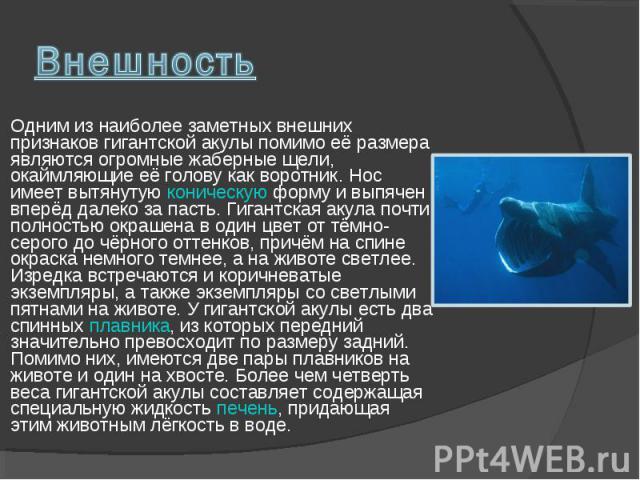 Одним из наиболее заметных внешних признаков гигантской акулы помимо её размера являются огромные жаберные щели, окаймляющие её голову как воротник. Нос имеет вытянутую коническую форму и выпячен вперёд далеко за пасть. Гигантская акула почти полнос…