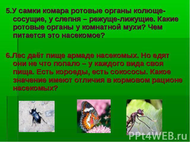5.У самки комара ротовые органы колюще-сосущие, у слепня – режуще-лижущие. Какие ротовые органы у комнатной мухи? Чем питается это насекомое? 5.У самки комара ротовые органы колюще-сосущие, у слепня – режуще-лижущие. Какие ротовые органы у комнатной…