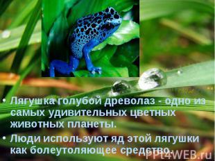 Лягушка голубой древолаз - одно из самых удивительных цветных животных планеты.