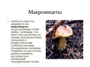 Наиболее известны каждому из нас макромицеты, представляющие собой грибы с шляпк