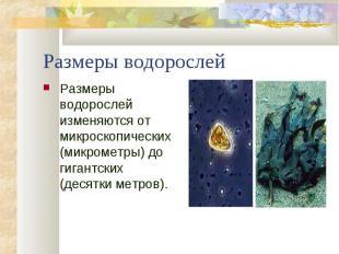 Размеры водорослей изменяются от микроскопических (микрометры) до гигантских (де