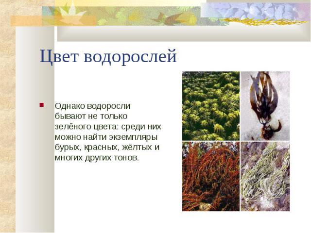 Однако водоросли бывают не только зелёного цвета: среди них можно найти экземпляры бурых, красных, жёлтых и многих других тонов. Однако водоросли бывают не только зелёного цвета: среди них можно найти экземпляры бурых, красных, жёлтых и многих други…
