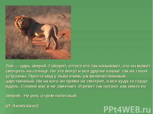 Лев — царь зверей. Говорят, оттого его так называют, что он может смотреть на со