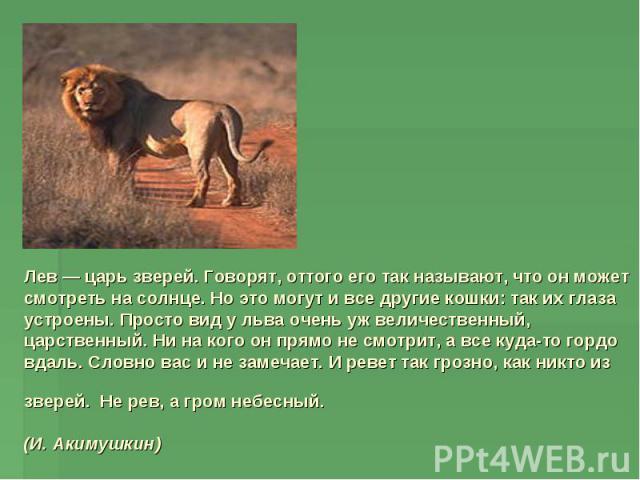 Лев — царь зверей. Говорят, оттого его так называют, что он может смотреть на солнце. Но это могут и все другие кошки: так их глаза устроены. Просто вид у льва очень уж величественный, царственный. Ни на кого он прямо не смотрит, а все куда-то гордо…