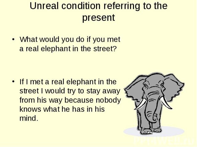 What would you do if you met a real elephant in the street? What would you do if you met a real elephant in the street? If I met a real elephant in the street I would try to stay away from his way because nobody knows what he has in his mind.