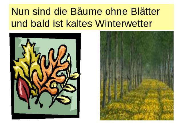 Nun sind die Bäume ohne Blätter und bald ist kaltes Winterwetter
