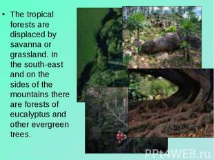 The tropical forests are displaced by savanna or grassland. In the south-east an