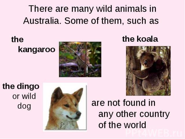 the kangaroo the kangaroo
