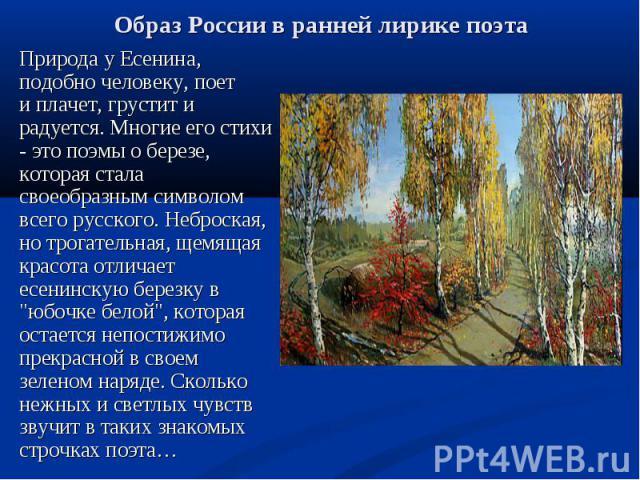 """Природа у Есенина, подобно человеку, поет и плачет, грустит и радуется. Многие его стихи - это поэмы о березе, которая стала своеобразным символом всего русского. Неброская, но трогательная, щемящая красота отличает есенинскую березку в """"юбочке…"""