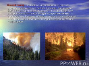 Лесной пожар – стихийное (неуправляемое) горение, распространившееся на л
