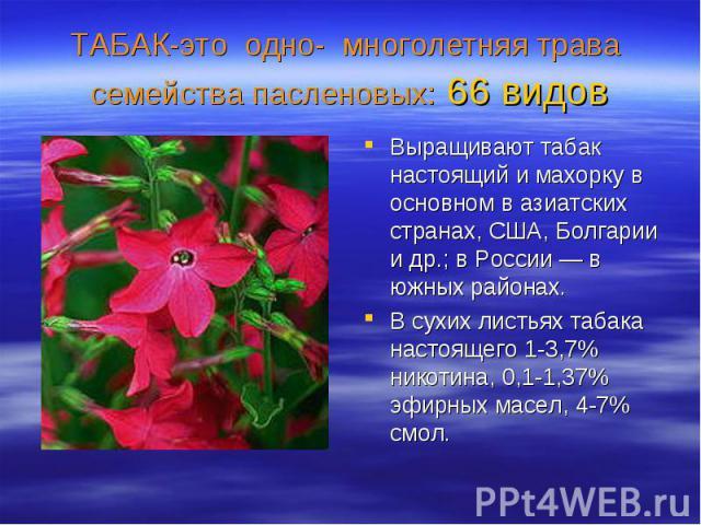 Выращивают табак настоящий и махорку в основном в азиатских странах, США, Болгарии и др.; в России — в южных районах. Выращивают табак настоящий и махорку в основном в азиатских странах, США, Болгарии и др.; в России — в южных районах. В сухих листь…