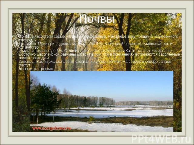 Почвы в лесостепи серые, лесные, черноземные. На севере зоны толщина черноземного слоя достигает 75 см при содержании гумуса до 9 %. К югу слой чернозема уменьшается, и количество гумуса снижается до 6%. Отличие почвы лесостепной зоны Казахстана от …