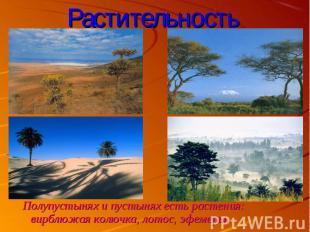 Полупустынях и пустынях есть растения: вирблюжая колючка, лотос, эфемеры. Полупу