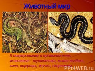 В полупустынях и пустынях есть животные: тушканчики, мыши полёвки, змеи, ящерицы