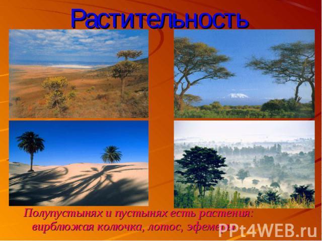 Полупустынях и пустынях есть растения: вирблюжая колючка, лотос, эфемеры. Полупустынях и пустынях есть растения: вирблюжая колючка, лотос, эфемеры.