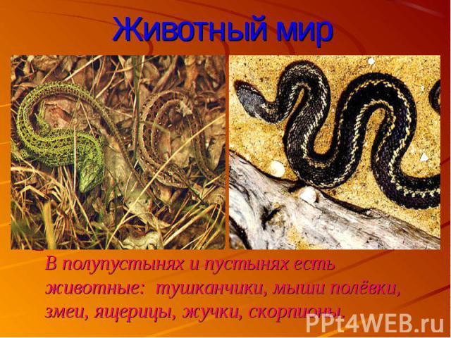 В полупустынях и пустынях есть животные: тушканчики, мыши полёвки, змеи, ящерицы, жучки, скорпионы. В полупустынях и пустынях есть животные: тушканчики, мыши полёвки, змеи, ящерицы, жучки, скорпионы.
