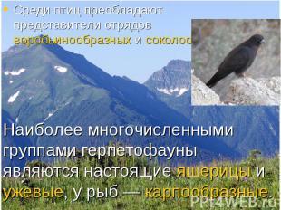 Среди птиц преобладают представители отрядов воробьинообразных и соколообразных