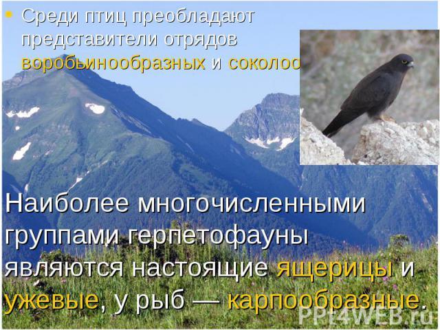 Среди птиц преобладают представители отрядов воробьинообразных и соколообразных Среди птиц преобладают представители отрядов воробьинообразных и соколообразных