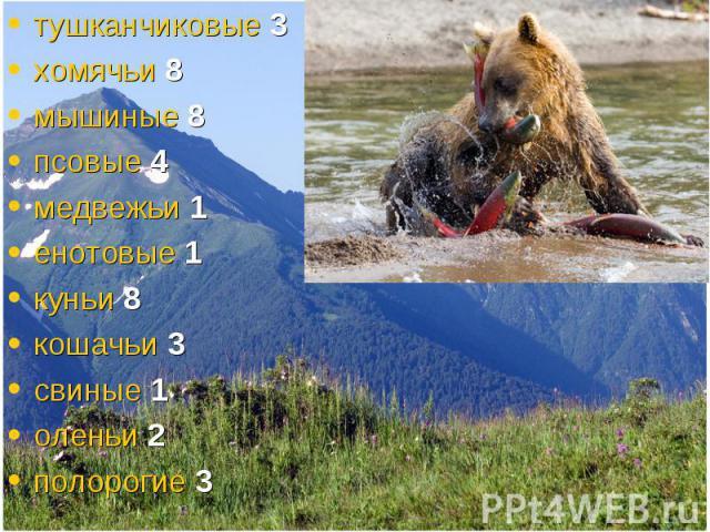 тушканчиковые 3 тушканчиковые 3 хомячьи 8 мышиные 8 псовые 4 медвежьи 1 енотовые 1 куньи 8 кошачьи 3 свиные 1 оленьи 2 полорогие 3