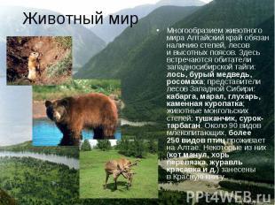 Многообразием животного мира Алтайский край обязан наличию степей, лесов и