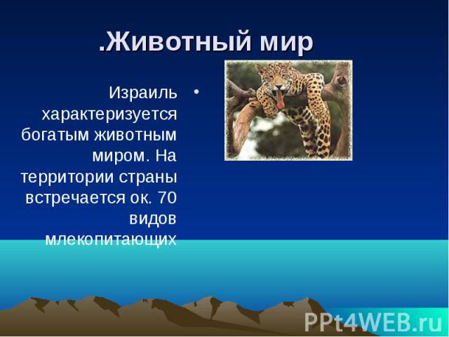Израиль характеризуется богатым животным миром. На территории страны встречается ок. 70 видов млекопитающих Израиль характеризуется богатым животным миром. На территории страны встречается ок. 70 видов млекопитающих