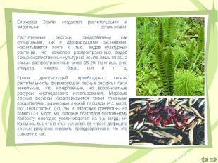 Биомасса Земли создается растительными и животными организмами. Растительные рес
