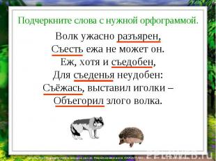 Волк ужасно разъярен, Съесть ежа не может он. Еж, хотя и съедобен, Для съеденья