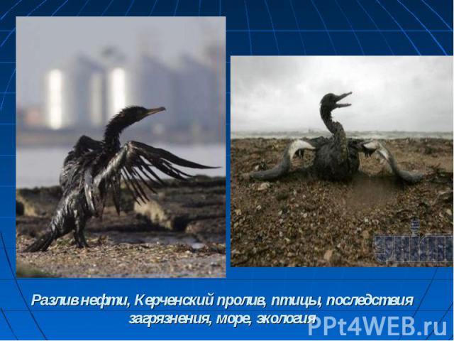 Разлив нефти, Керченский пролив, птицы, последствия загрязнения, море, экология