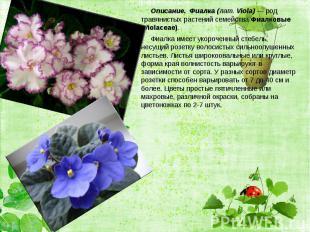 Описание. Фиалка (лат. Viola)— род травянистых растений семейства Фиалковы