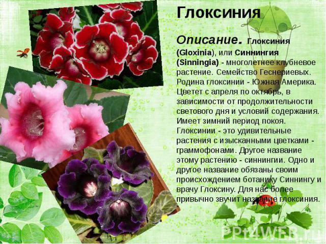Глоксиния Глоксиния Описание. Глоксиния (Gloxinia), или Синнингия (Sinningia) - многолетнее клубневое растение. Семейство Геснериевых. Родина глоксинии - Южная Америка. Цветет с апреля по октябрь, в зависимости от продолжительности светового дня и у…
