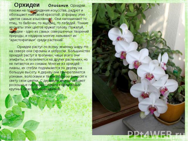 Орхидеи Описание. Орхидеи похожи на произведения искусства, радуют и обогащают нас своей красотой. И формы этих цветов самые изысканные. Они напоминают то птиц, то бабочек, то ящериц, то лебедей. Тонкие ароматы этих цветов кружат голову. Пожалуй, ор…