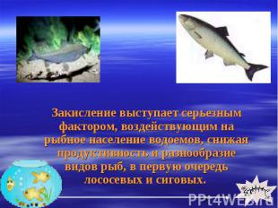 Закисление выступает серьезным фактором, воздействующим на рыбное население водо