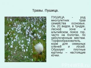 Травы. Пушица. ПУШИЦА - род многолетних трав семейства осоковых. Ок. 20 видов, в